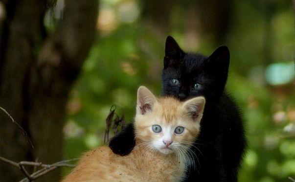 Grise Bouille n'est pas un chat !