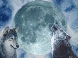 Hurler avec les loups ? Ou pas…