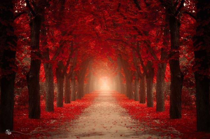 Restez sur le chemin rouge… MNN et le grain de sable JBL