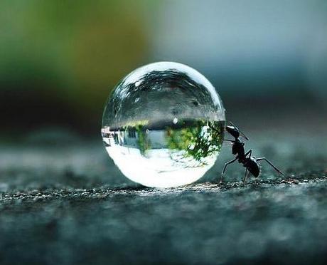 Entre mon travail de Jo la fourmi et l'ESSENTIEL des mouches du coche R71 depuis 2010 ;