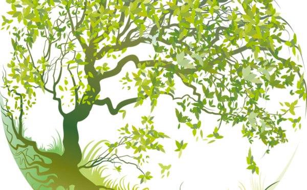 Planter l'arbre de demain ; (MàJ 18/07/19)