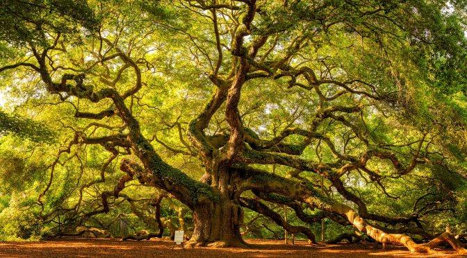 L'arbre, Nouvelle Chronique du Presque Dr. T'Ché-RIEN, dans une version PDF gratos de Jo