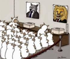 mouton.vote