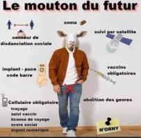 MOUTON DU FUTUR